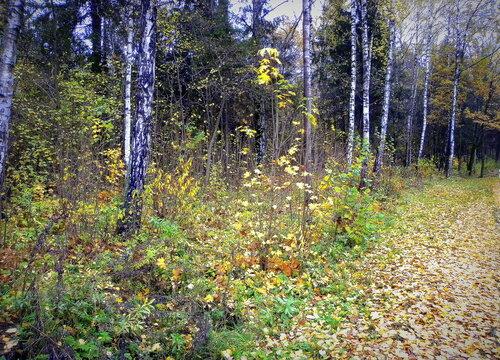 Прогулка по лесу в октябре