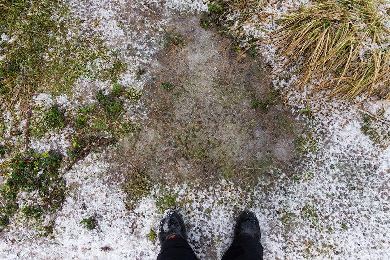 капель и тающий снег весной в лесу