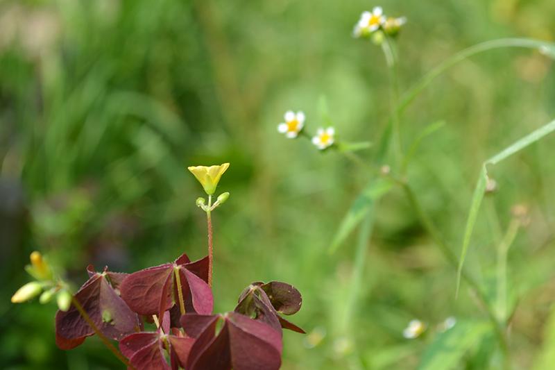 цветочное 12 16.jpg