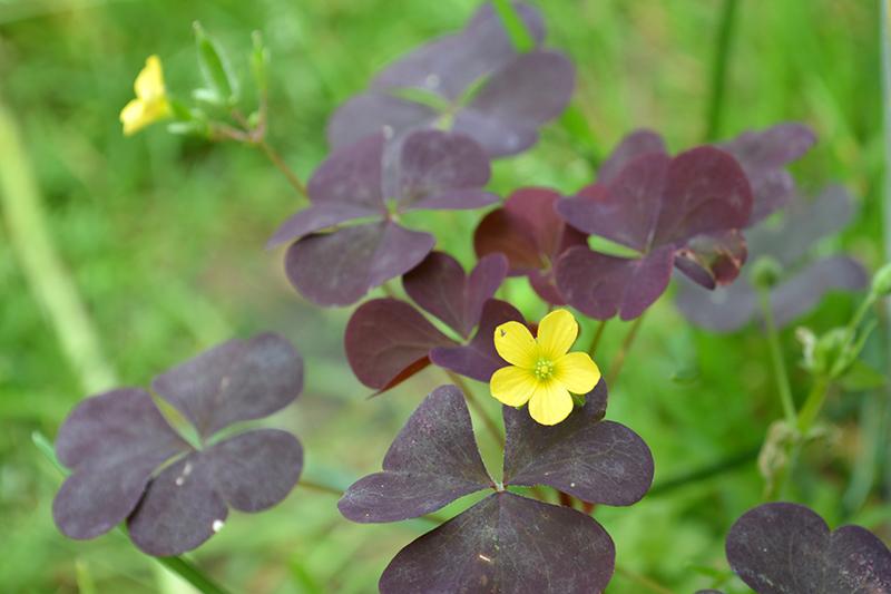 цветочное 13 16.jpg