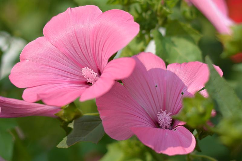 цветочное 22 16.jpg