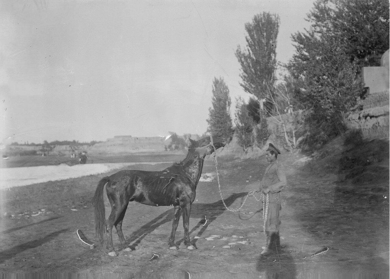 Лошадь Маннергейма