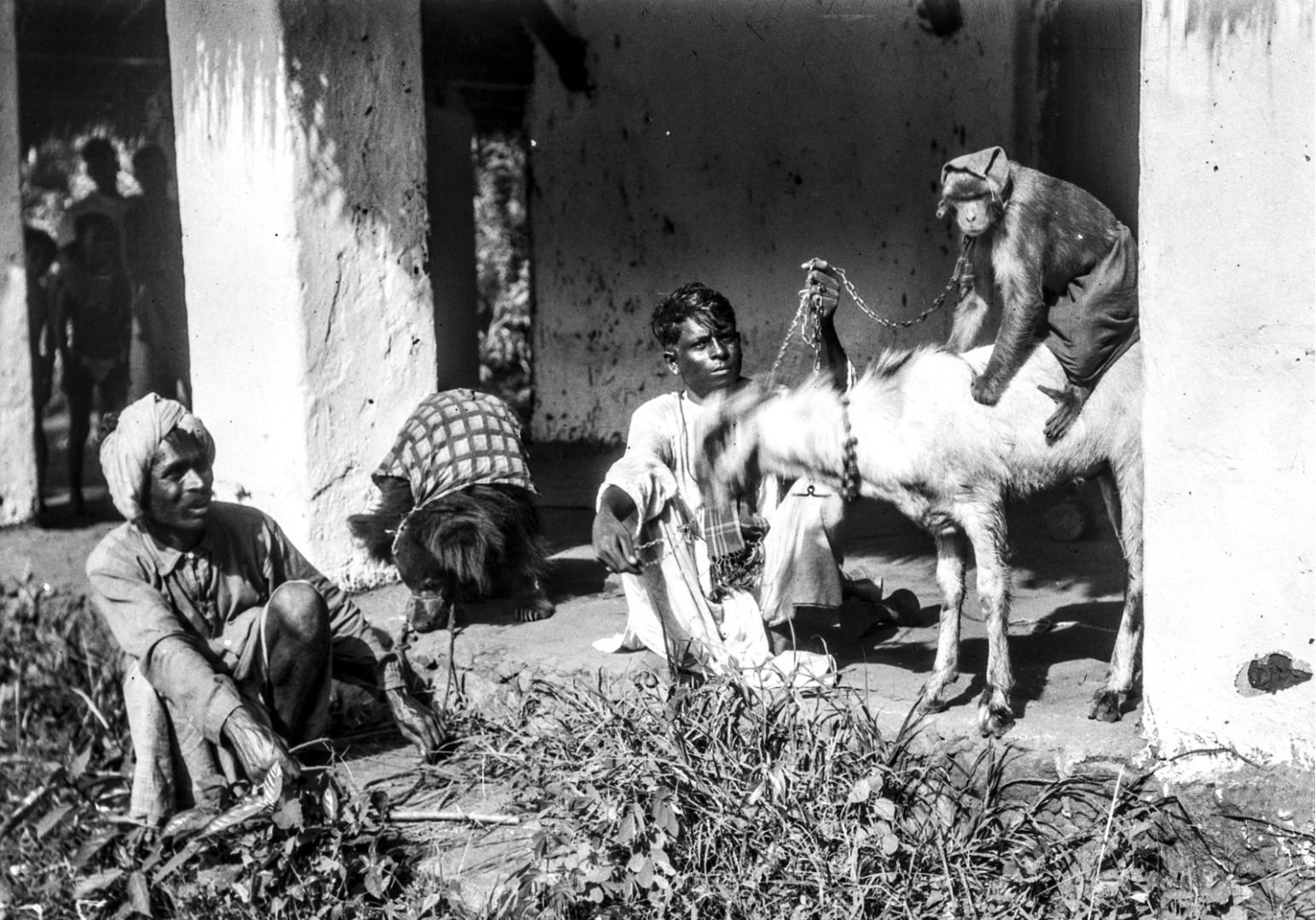 800. Орисса. Два человека с обезьяной, козой и медведем на цепи