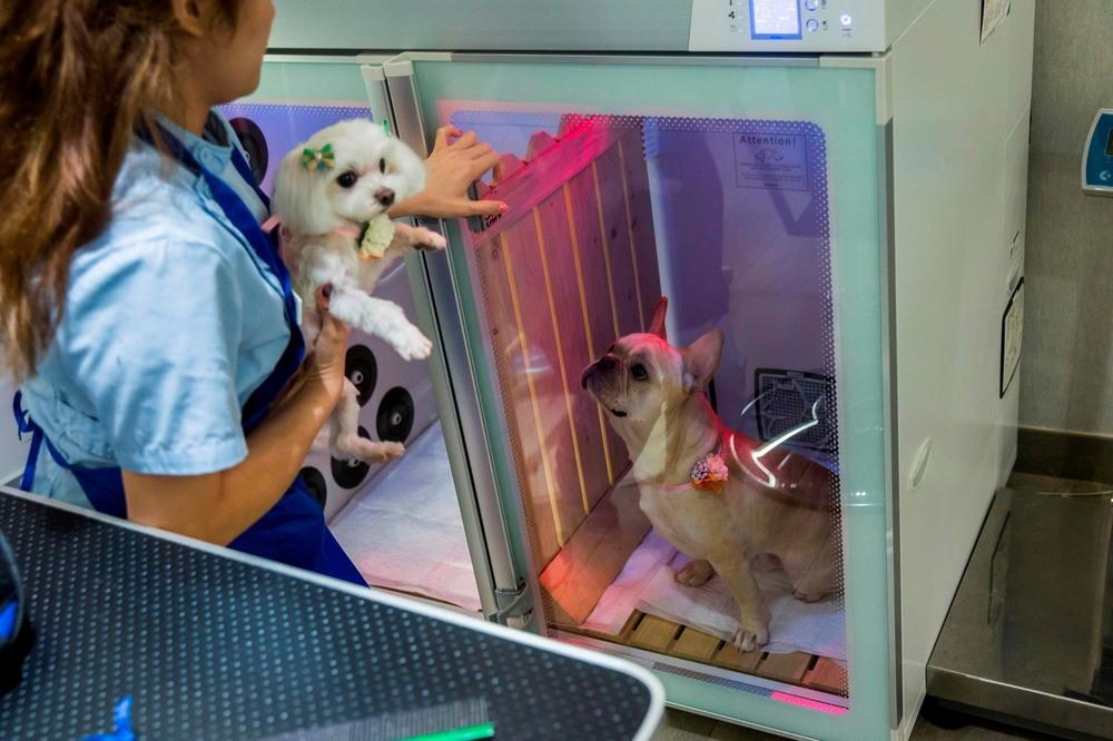 Жизнь собак в Гонконге