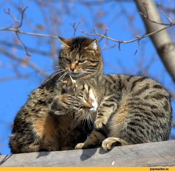 Картинки. Март, коты, любовь
