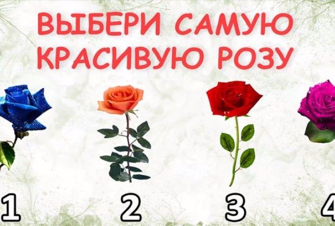 розы красиво особенности красивые самые Что прочитать