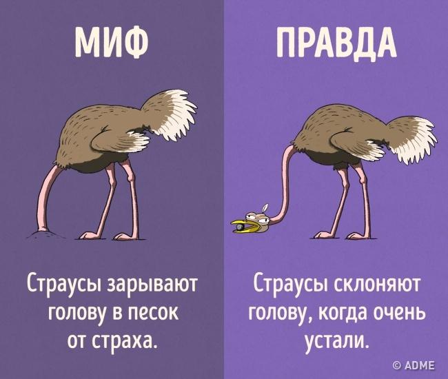 мир животных животный мир страусы голова вера факты животные В мире