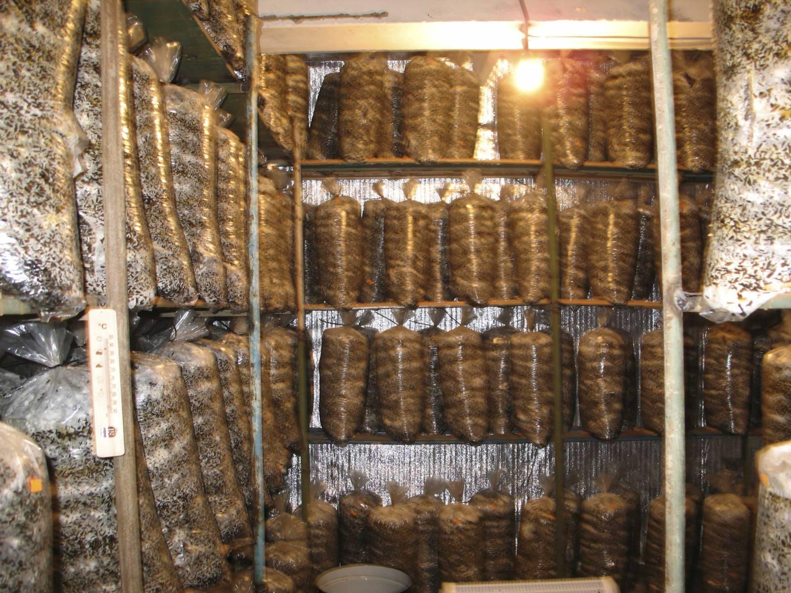 красные родинки грибная ферма в подвале фото всего
