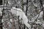 Причуды зимы