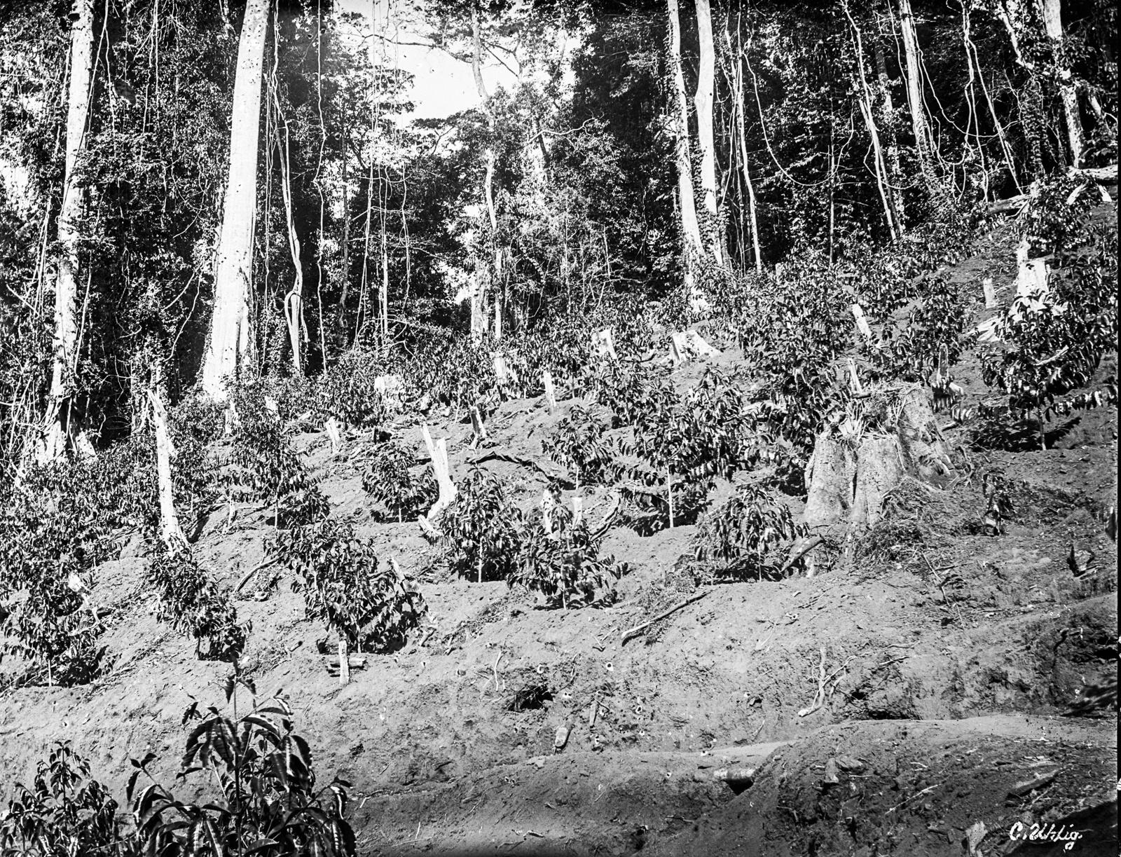 75. Посадки на краю леса