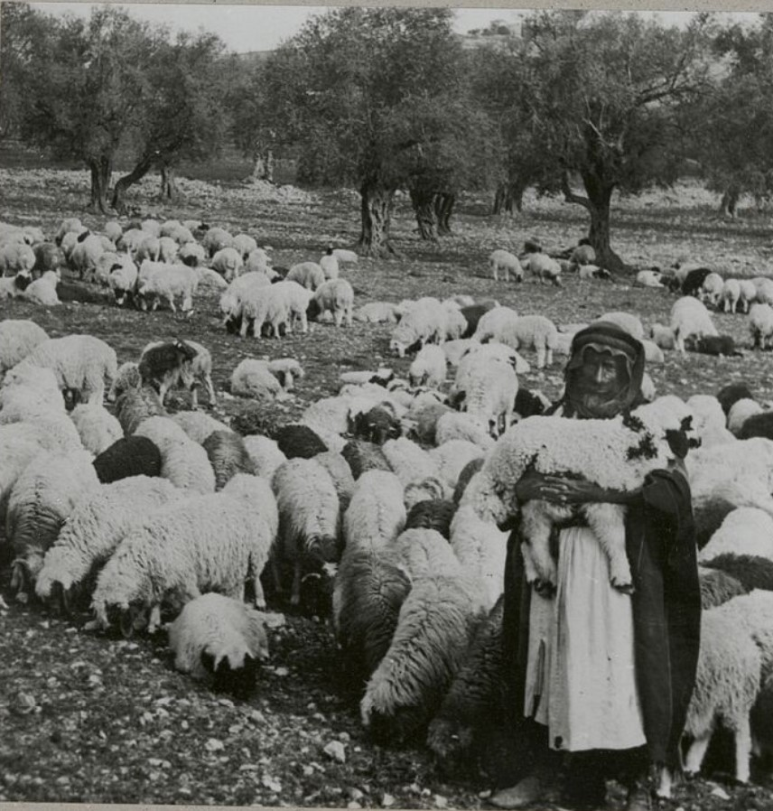 Пастух и его стадо овец