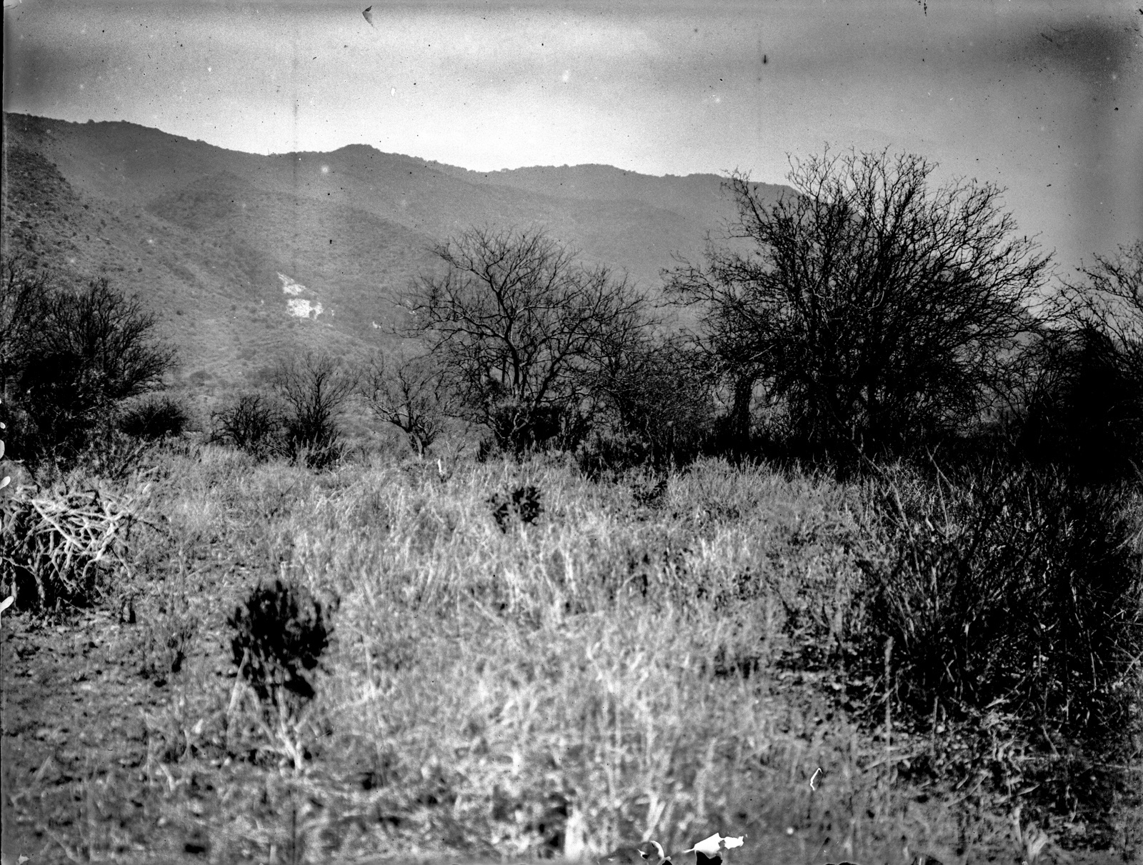 201. Травы и кустарники перед горным хребтом