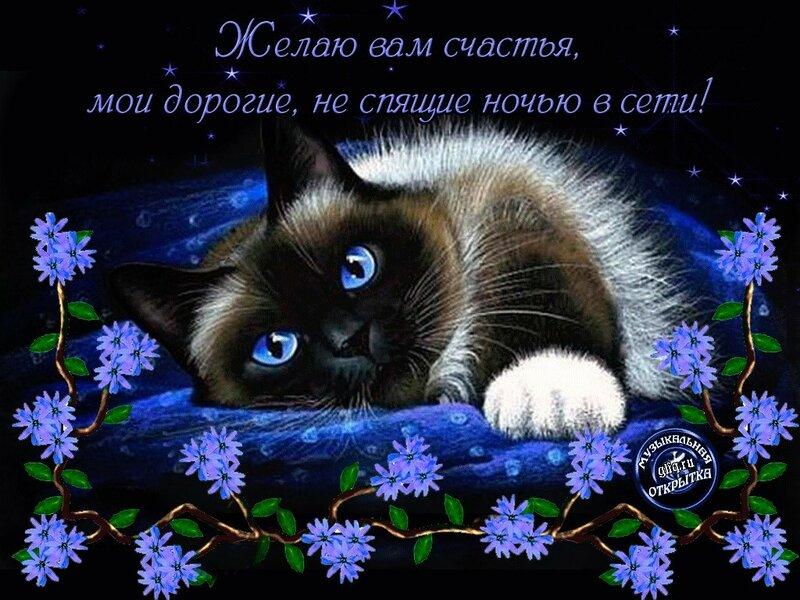 Поздравления, открытки с котами и пожеланиями спокойной ночи