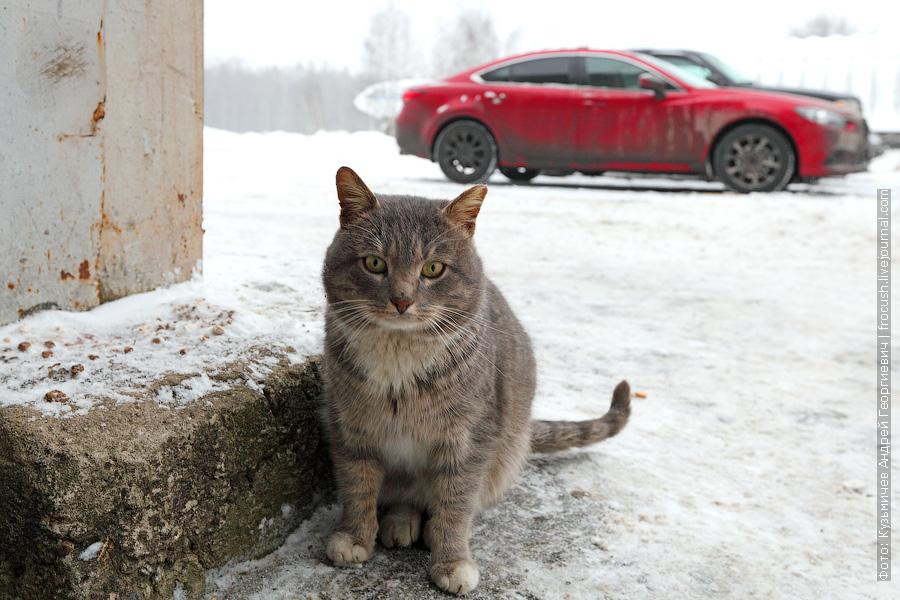 кошка на УАТЦ МГТУ ГА
