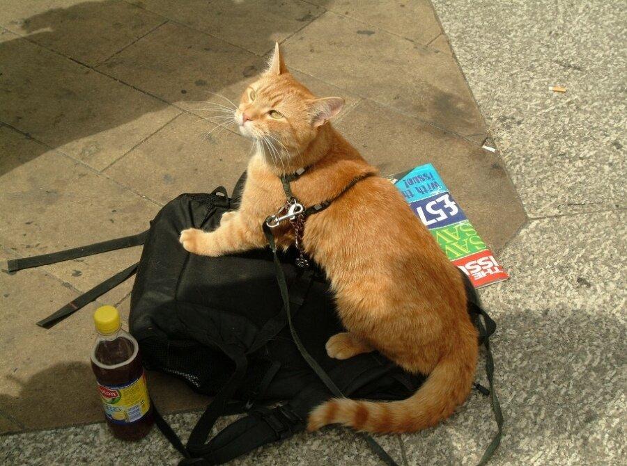 Уличный кот по имени боб аудиокнига скачать торрент