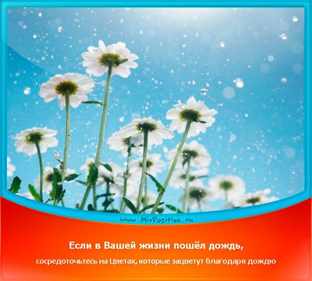 позитивчик дня: Если в Вашей жизни пошел дождь сосредоточьтесь на цветах, которые зацветут благодаря дождю