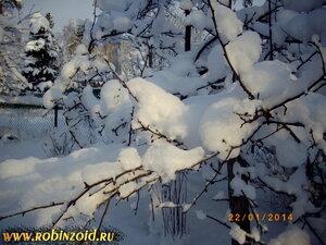 зимний огород