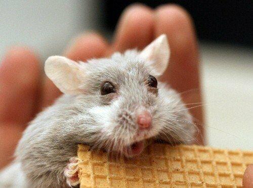страх у животных