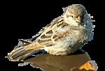 http://img-fotki.yandex.ru/get/9895/97761520.1e/0_7d639_f941bbbe_orig.png