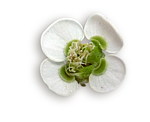 http://img-fotki.yandex.ru/get/9895/97761520.ce/0_7fba0_142f2e30_orig.png