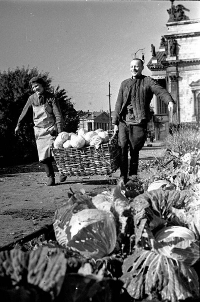 Работники Н-ского госпиталя Е.Скарионова и М.Бакулин за сбором капусты. 1942 г.