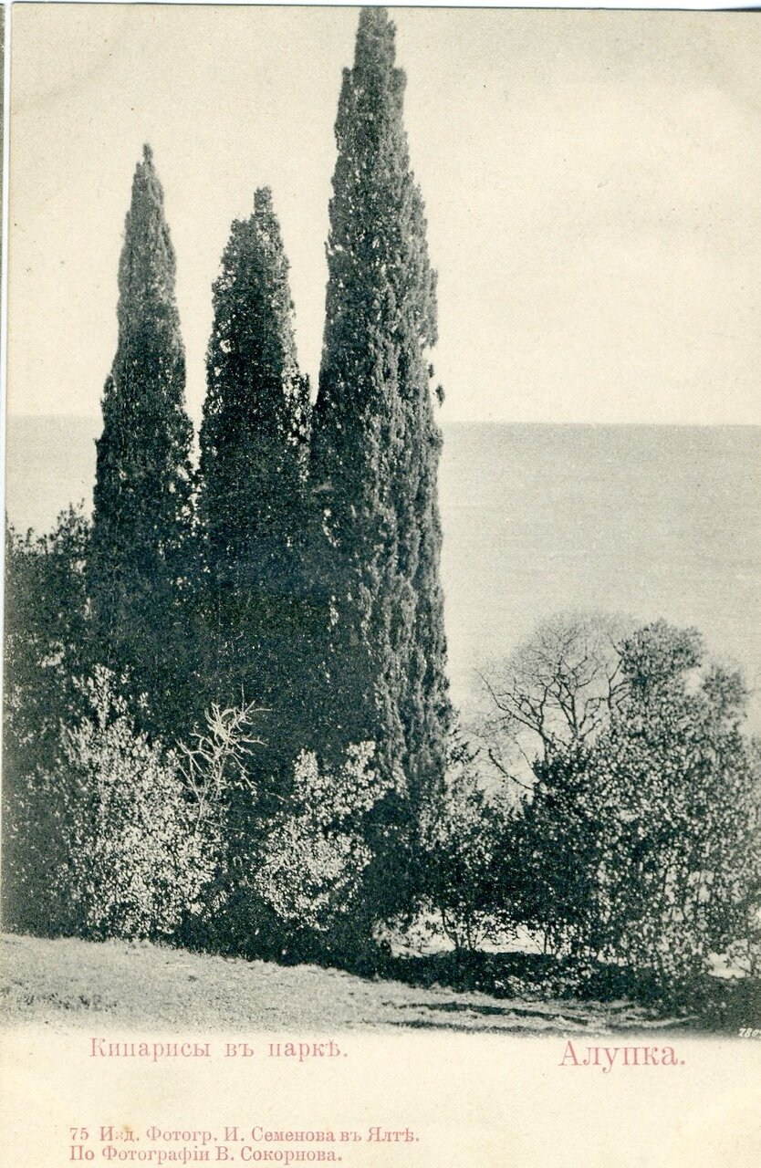 Кипарисы в парке