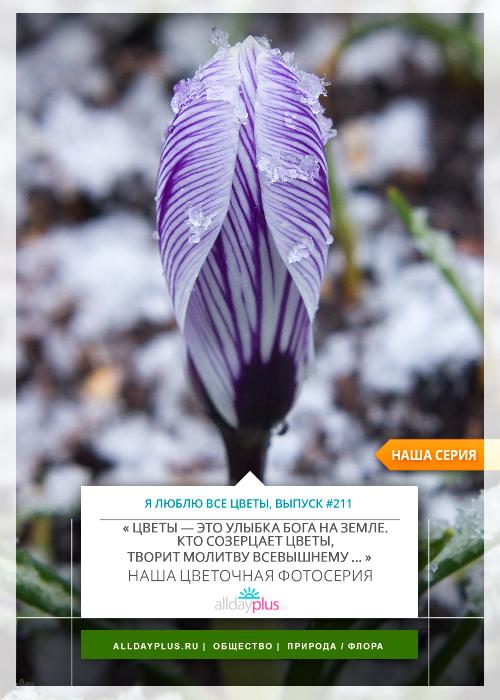Я люблю все цветы, выпуск 211 | Март 2016.