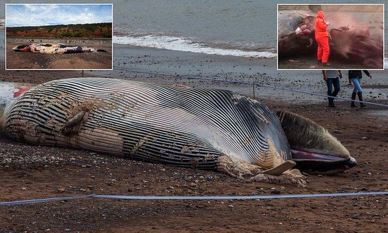 Разложившуюся тушу кита выбросило на пляж в Великобритании
