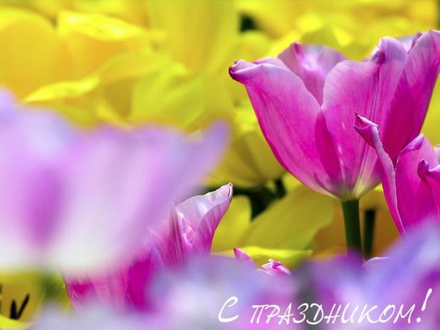 С днем российской адвокатуры! Цветы тюльпаны открытки фото рисунки картинки поздравления