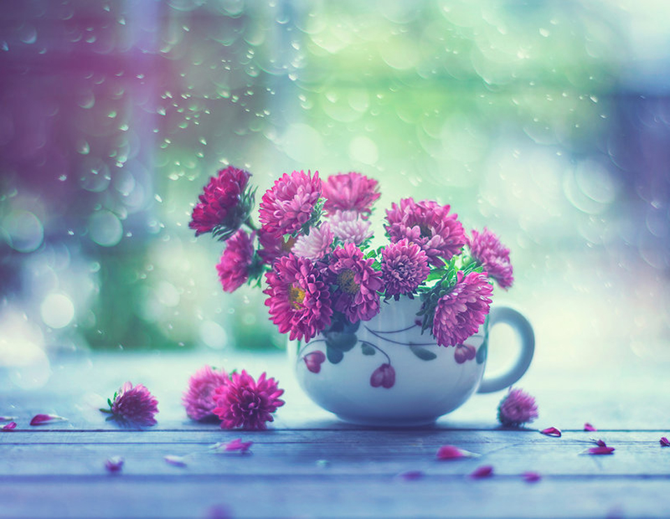 cup_of_spring_by_arefin03-d8sr5qz.jpg