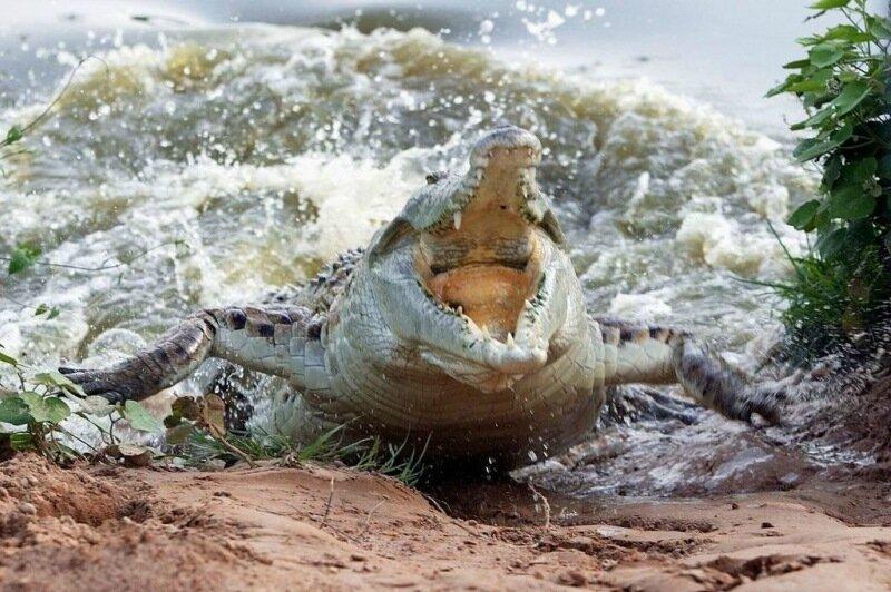 Посетительница зоопарка прыгнула к крокодилам