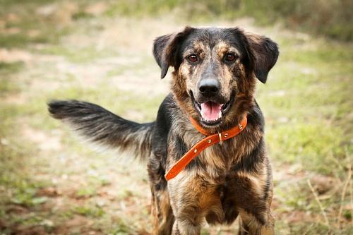 Бернард собака из приюта догпорт
