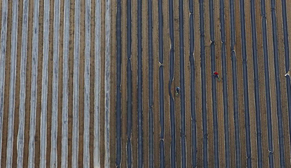 4. Соляные бассейны в Чили, 10 января 2013. (Фото IVAN ALVARADO). Также смотрите « Странная кра