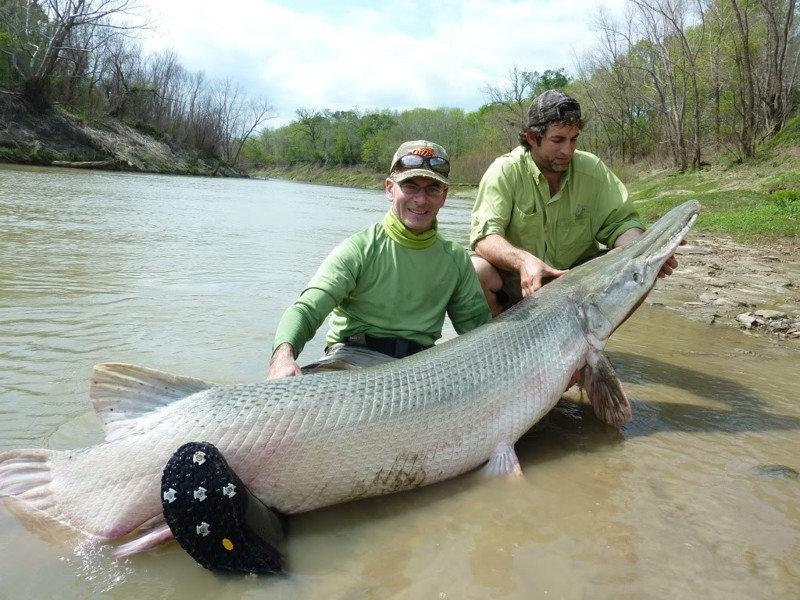 Очень длинная рыбка.