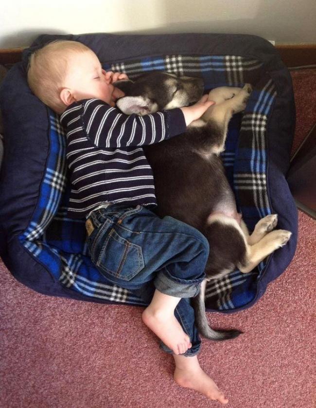Спят усталые игрушки, книжки спят...