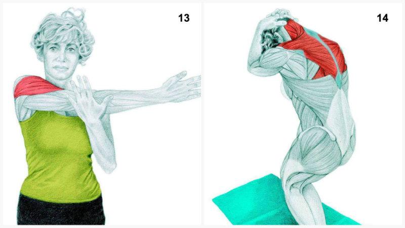 14. Комплексная растяжка шеи, трапециевидной мышцы, спины.15.Вытяжение позвоночника при поднима