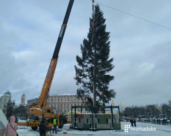 Встолице установили новогоднюю елку 3