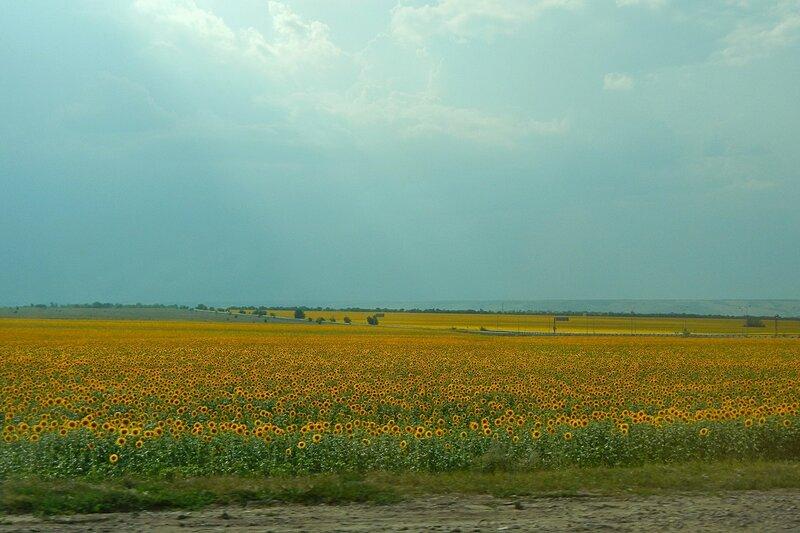 Подсолнуховые поля до горизонта - Путешествие из Кирова в Крым на автомобиле