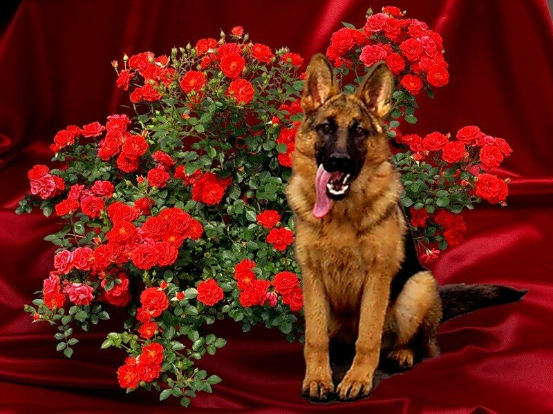 это поздравление питомнику собак он-лайн каталоге нашего