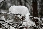 Снежная фигура с хвостиком