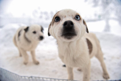 Нальчик ищет вора, которым украдены собаки на 100 тысяч рублей