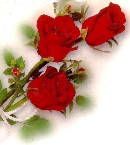 Поздравительная открытка розы открытка поздравление рисунок фото картинка
