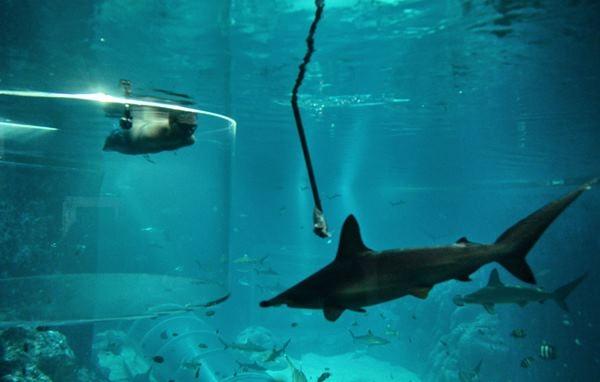 Ник Вуйичич поплавал в воде со смертельными акулами 0 12da8e 8a0d9eee orig