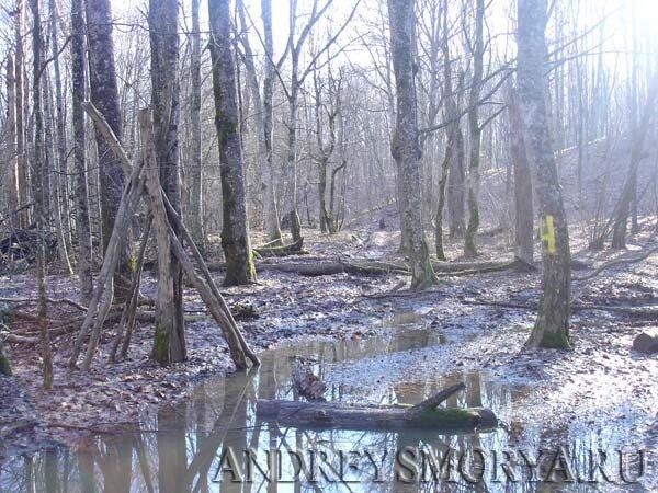 Зимой в лесу. Хутор Ахонка