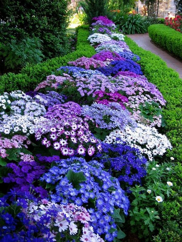 Цветник синий - цвет надежды