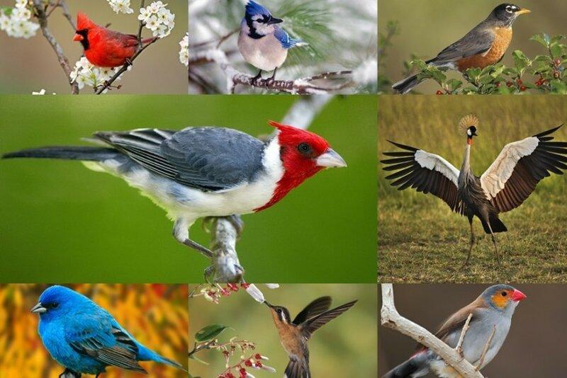 Волшебные птицы (45 отличных фото на рабочий стол) 0 1c4132 e542961b XL