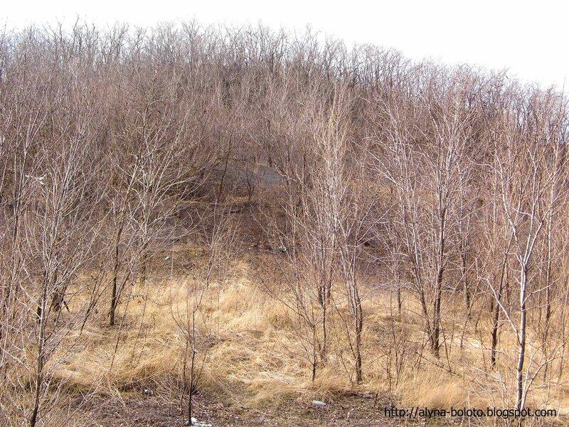 Терикон в деревьях