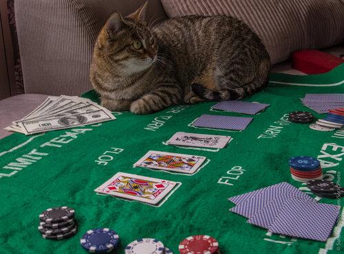 Поиграй с кошкой