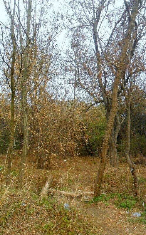 В лесу осеннем ... SAM_4445.JPG