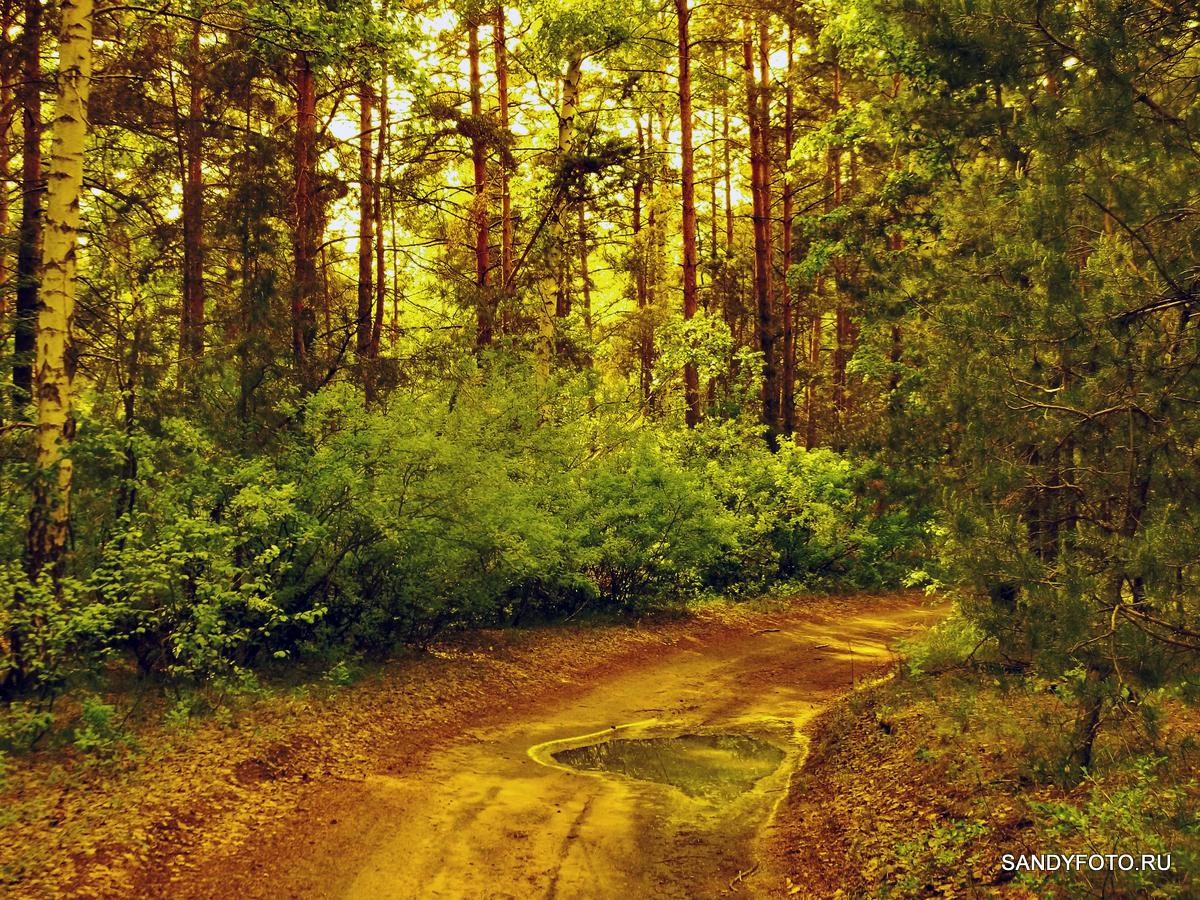Сказочный лес в посёлке ГРЭС